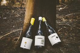 Al unísono, los críticos aplauden los vinos de Bodegas El Paraguas